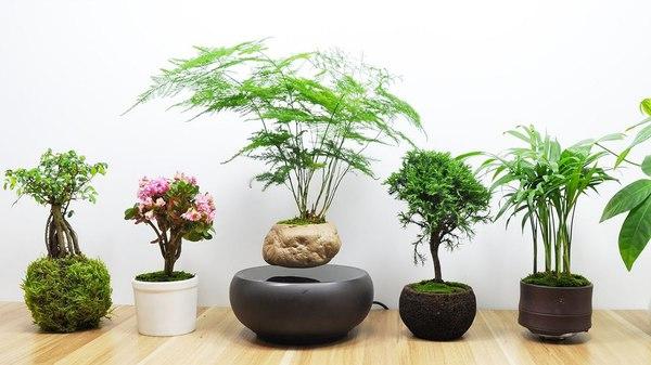 May mắn ngập tràn nếu trồng đúng các loại cây phong thủy này trong nhà