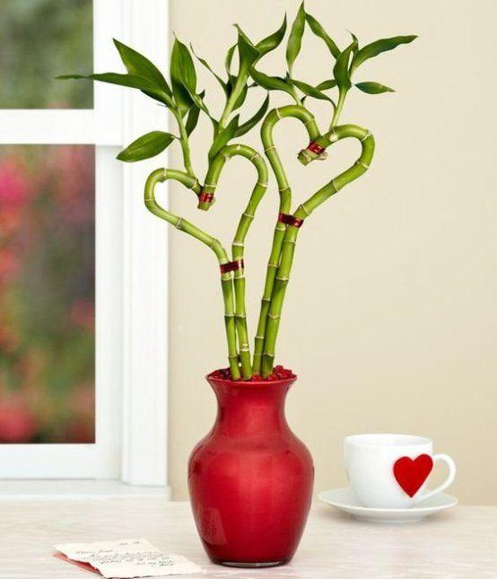 Người mệnh thổ nên trồng châu phát lộc màu đỏ hoặc vàng..