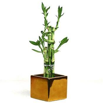 Người mệnh Kim nên chọn chậu trồng cây theo màu vàng, cam, nâu hoặc màu trắng