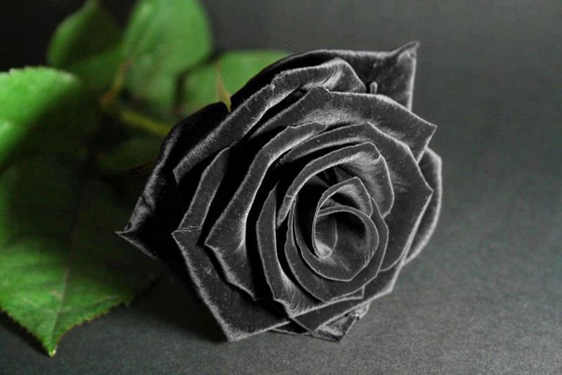 Hoa hồng đen khi nhắc đến hoa chia buồn và sự cô đơn