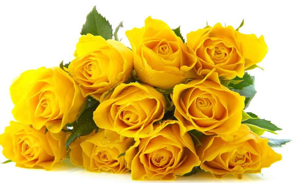 Hoa hồng vàng nói đến sự chia ly, nỗi buồn và những giọt nước mắt