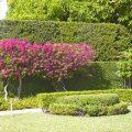 10 ý tưởng tuyệt vời sử dụng hoa giấy cho vườn bạn