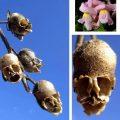 18 loài hoa độc đáo kỳ dị nhất thế giớ