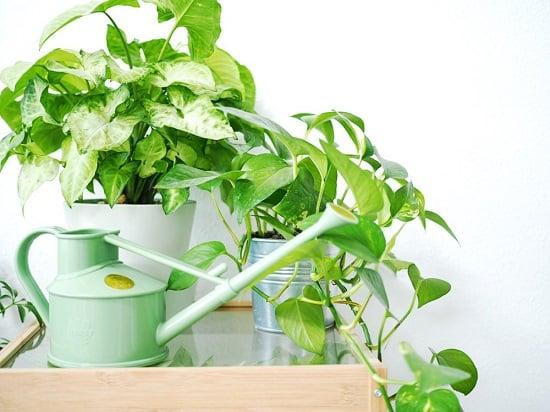 Biết nhu cầu của loại cây trồng