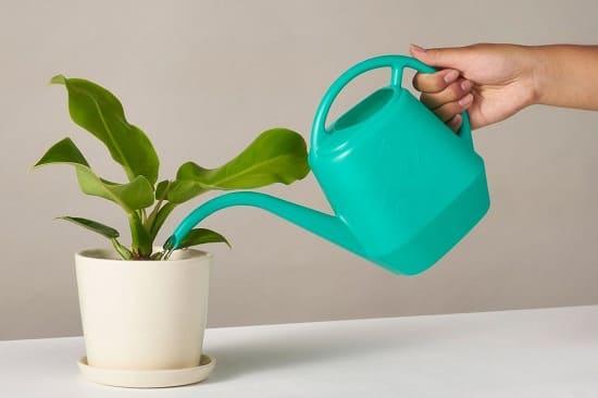Cách tưới nước cho cây trồng trong nhà