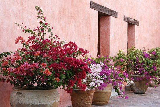 Tạo một khu vườn hoa giấy