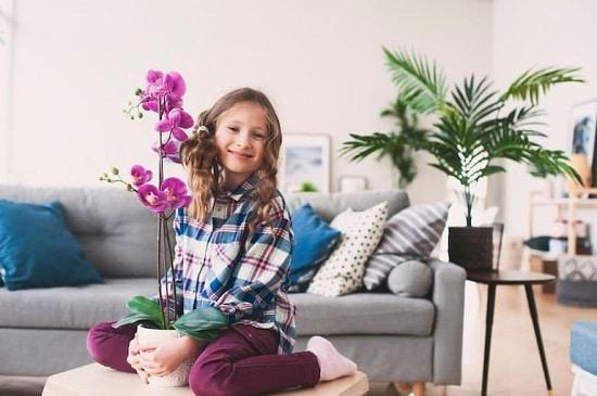 Mẹo chăm sóc lan | Chăm sóc lan trong nhà