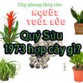 Tuổi Quý Sửu 1973 hợp cây gì? Tổng hợp cây cảnh phong thủy cho người tuổi Quý Sửu