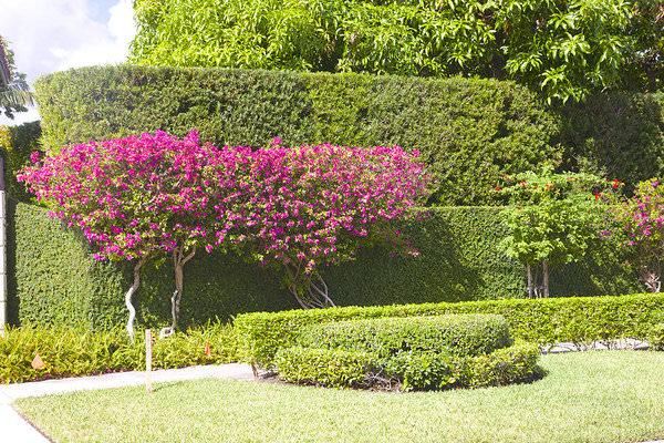 Để có đường viền đẹp nhất cho khu vườn