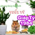 Tuổi Giáp Tý [1984] hợp cây phong thủy gì? Nên trồng cây nào mang lại may mắn tài lộc?