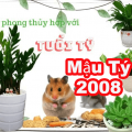 Tuổi Mậu Tý [2008] hợp cây phong thủy gì? Nên trồng cây nào mang lại may mắn tài lộc?
