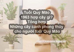 Tuổi Quý Mão 1963 hợp cây gì? Tổng hợp những cây cảnh phong thủy cho người tuổi Quý Mão