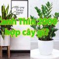 Tuổi canh thìn 2000 hợp cây gì
