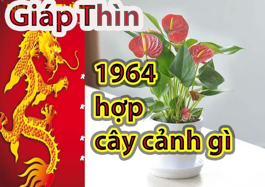 """Tuổi Giáp Thìn 1964 hợp cây gì? Cây phong thủy mang """"may mắn"""" cho người tuổi Giáp Thìn"""