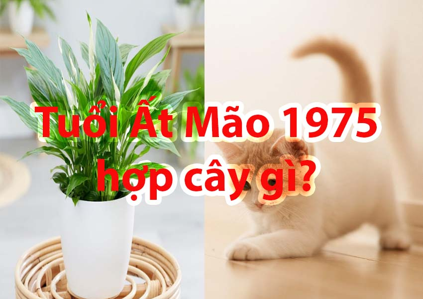 Tuổi Ất Mão 1975 hợp với cây gì? Cây cảnh phong thủy tuổi Ất Mão mang lại tài lộc may mắn.