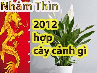 Tuổi Nhâm Thìn 2012 hợp với cây cảnh gì? Tổng hợp cây phong thủy mang tài lộc may mắn cho tuổi Nhâm Thìn