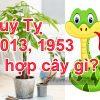 Tuổi Quý Tỵ 2013, 1953 hợp cây gì? Trồng cây gì để hợp phong thủy?
